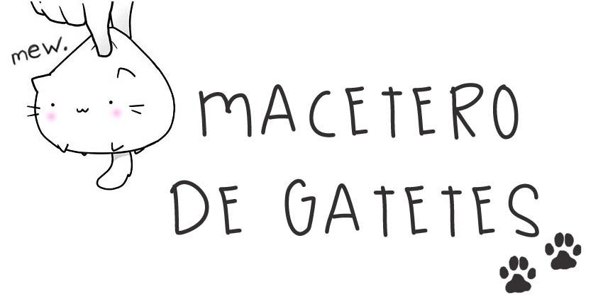 macetero_gato_chachi_psitachi